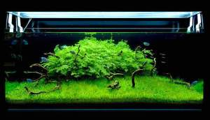 aquascape-air-tawar