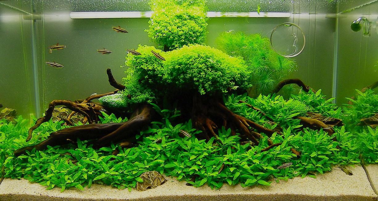Cara perawatan dan pemeliharaan aquascape…….!!! – Ferboes.com