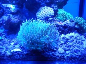 Indahnya pemandangan laut didalam aquarium….!!!