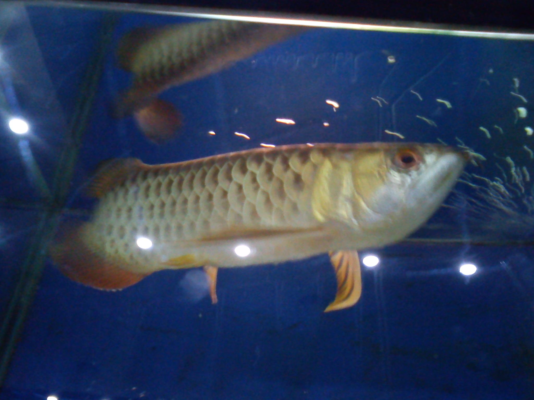 Jenis 2 Ikan