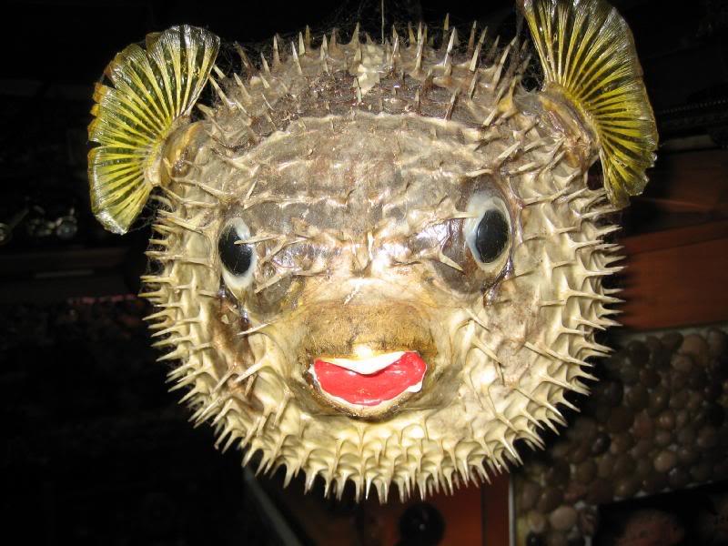 Ikan buntel