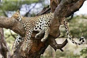 Wild-Animals-wild-animals-5907030-640-425