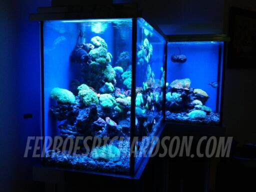 Inspirasi aquarium ini luaarrr biaasaaa for Aquarium katalog