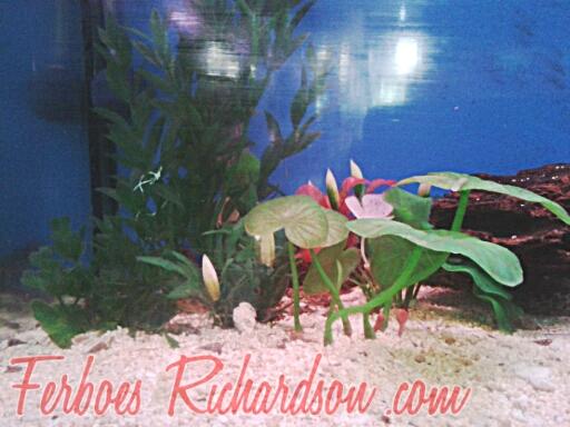 macam-macam pajangan aquarium2.jpg