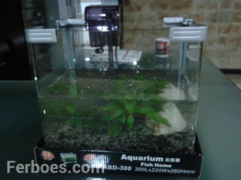 Dekorasi Aquarium Simple…!!!