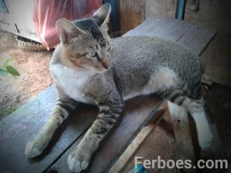 wpid-kucing-01.jpg