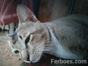 wpid-kucing-02.jpg