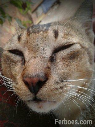 wpid-kucing-05.jpg