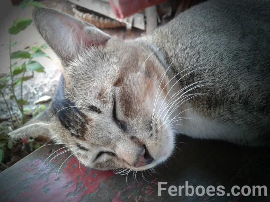 wpid-kucing-07.jpg