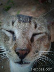 wpid-kucing-09.jpg