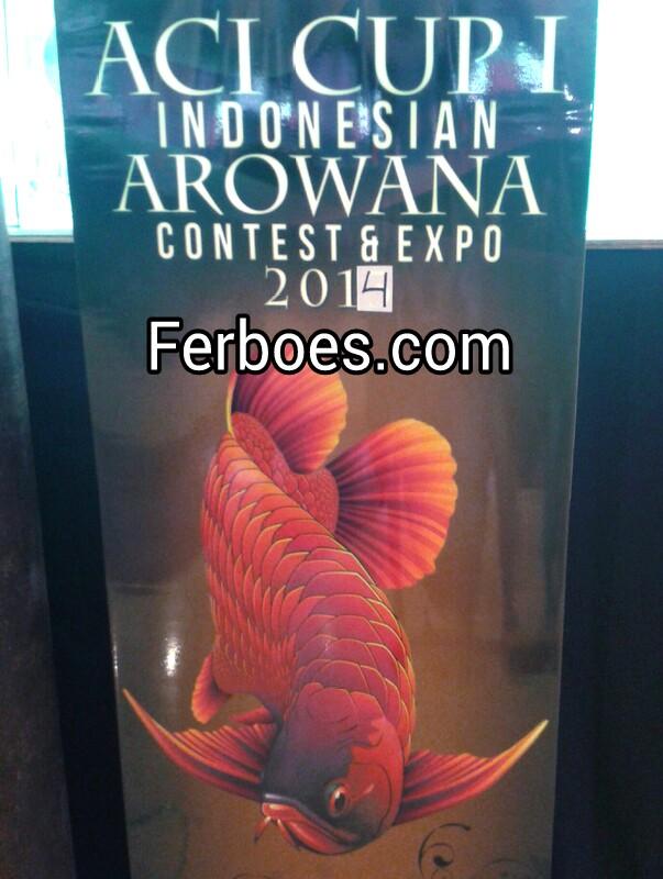 Ikan Arwana Kontes Di WTC Mangga Dua2014