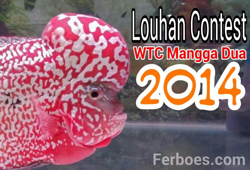 Ikan Louhan Kontes di WTC Mangga Dua2014