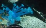 Artificial coral-9.jpg