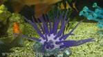Artificial coral-4.jpg
