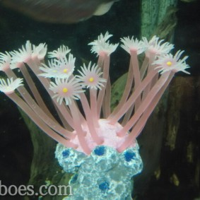 Artificial coral-11.jpg