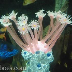 Artificial coral-10.jpg