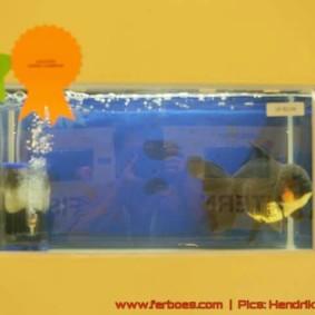 Goldfish grand champion Aquarama-03.jpg