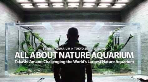 Master Aquascape Takashi Amano Telah Meninggal Dunia Ferboes Com