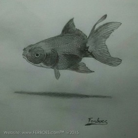 Menggambar ikan koki_3.jpg