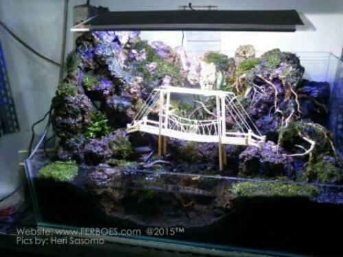 pajangan aquarium | Ferboes.com