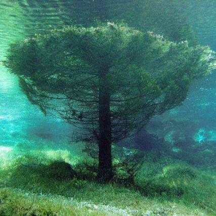 Pemandangan alam dibawah air_22.jpg