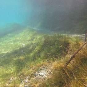 Pemandangan alam dibawah air_9.jpg