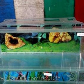 Aquarium murah meriah_8.jpg
