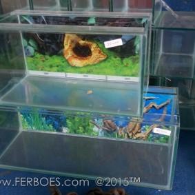 Aquarium murah meriah_7.jpg