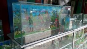 Aquarium murah meriah_6.jpg
