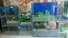 Aquarium murah meriah_3.jpg