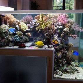 Inspsirasi aquarium