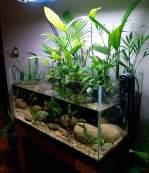 Inspirasi aquarium-5