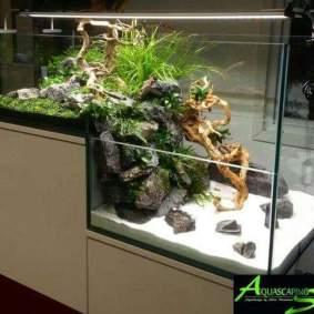 Inspirasi aquarium-6
