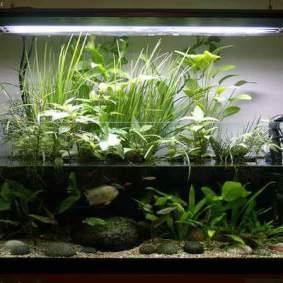 Insporasi aquarium_12
