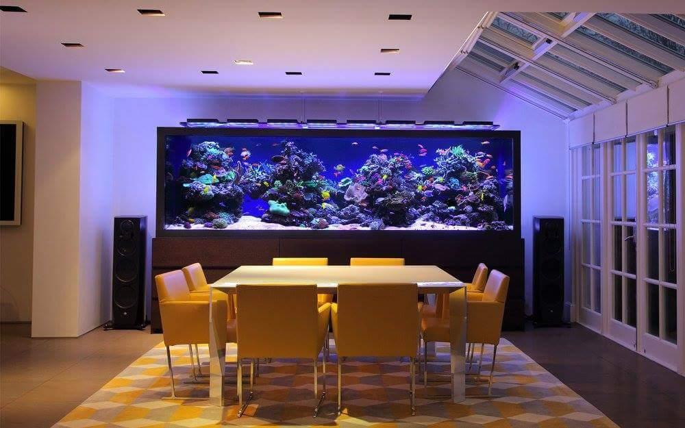 Inspirasi Aquarium Keren Untuk Didalam Ruangan Ferboes Com