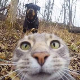 Kucing-selfie-1