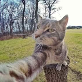Kucing-selfie-2