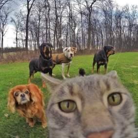 Kucing-selfie-3