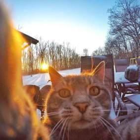 Kucing-selfie-4