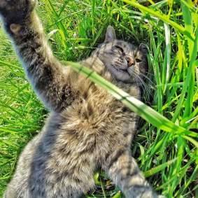 Kucing-selfie-5