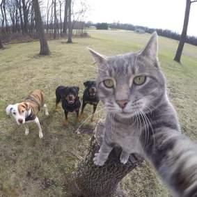 Kucing-selfie-7