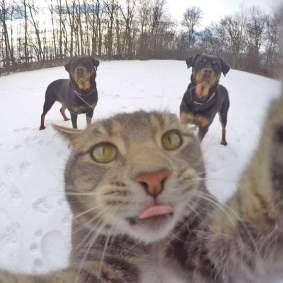 Kucing-selfie-8