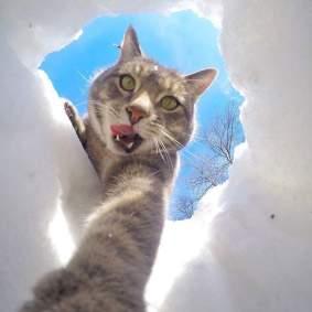 Kucing-selfie-9